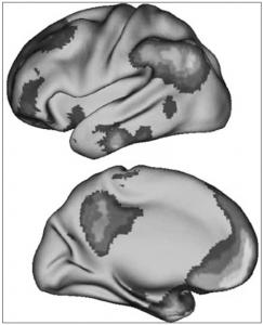 brain default mode network