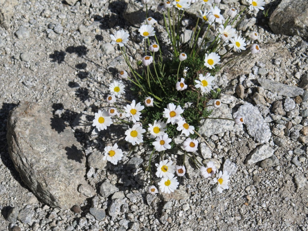 Flowers out of stone