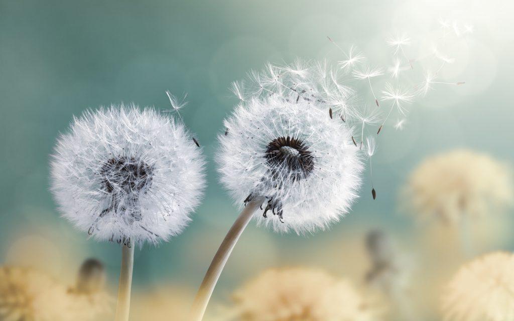 dreamstime m 128815618 wind2